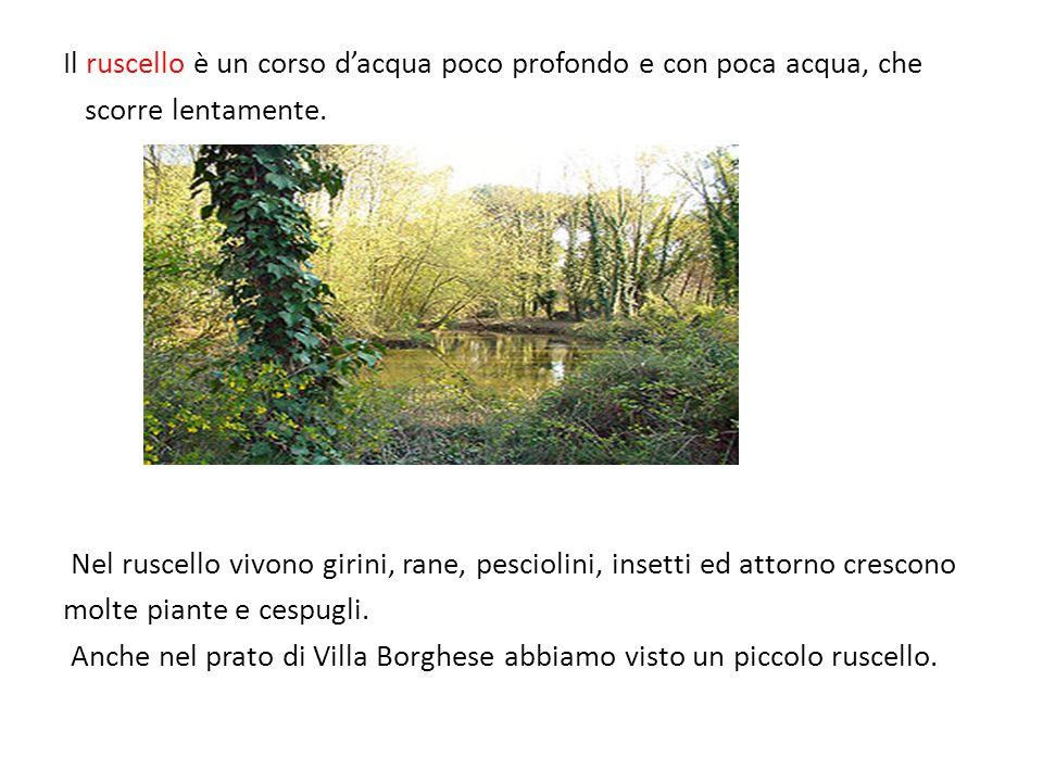 Il ruscello è un corso dacqua poco profondo e con poca acqua, che scorre lentamente. Nel ruscello vivono girini, rane, pesciolini, insetti ed attorno