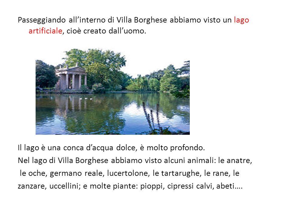Passeggiando allinterno di Villa Borghese abbiamo visto un lago artificiale, cioè creato dalluomo. Il lago è una conca dacqua dolce, è molto profondo.