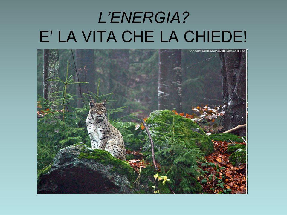 LENERGIA E LA VITA CHE LA CHIEDE!