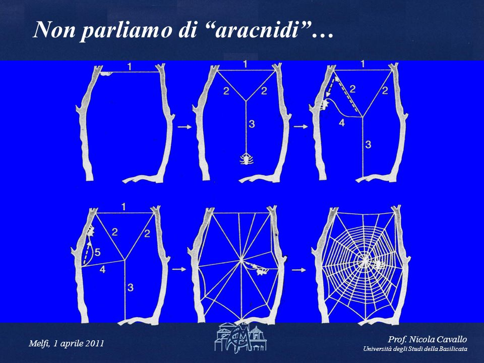 Melfi, 1 aprile 2011 Prof. Nicola Cavallo Università degli Studi della Basilicata Non parliamo di aracnidi…