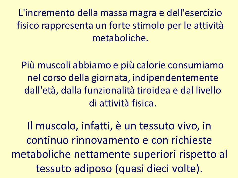 L'incremento della massa magra e dell'esercizio fisico rappresenta un forte stimolo per le attività metaboliche. Più muscoli abbiamo e più calorie con