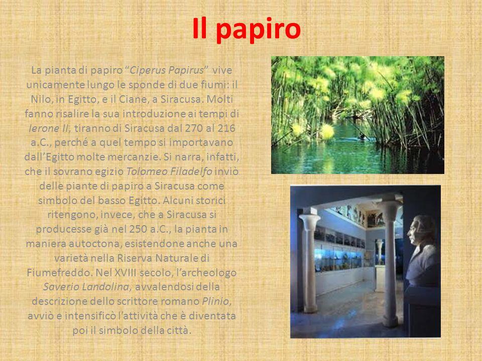 Il papiro La pianta di papiro Ciperus Papirus vive unicamente lungo le sponde di due fiumi: il Nilo, in Egitto, e il Ciane, a Siracusa. Molti fanno ri