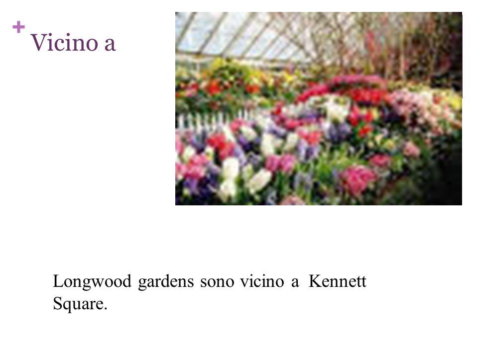 + Vicino a Longwood gardens sono vicino a Kennett Square.