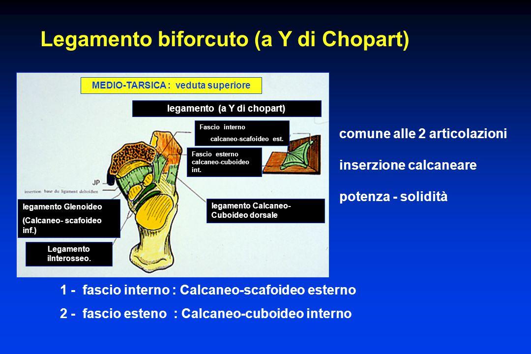 Legamento biforcuto (a Y di Chopart) Fascio interno calcaneo-scafoideo est. legamento Calcaneo- Cuboideo dorsale legamento (a Y di chopart) legamento