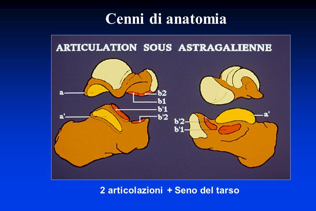 2 articolazioni + Seno del tarso Cenni di anatomia