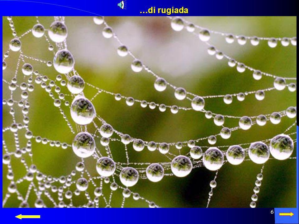 5 ecco come allo stato liquido si presenta sotto forma di pioggia… ecco come allo stato liquido si presenta sotto forma di pioggia…