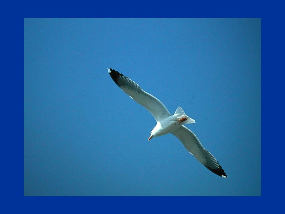 Mi fa sentire libero e felice, come un uccello che vola nel cielo alto e celeste. Oh mare profondo, vorrei tuffarmi nel tuo mondo, nuotare nelle tue a