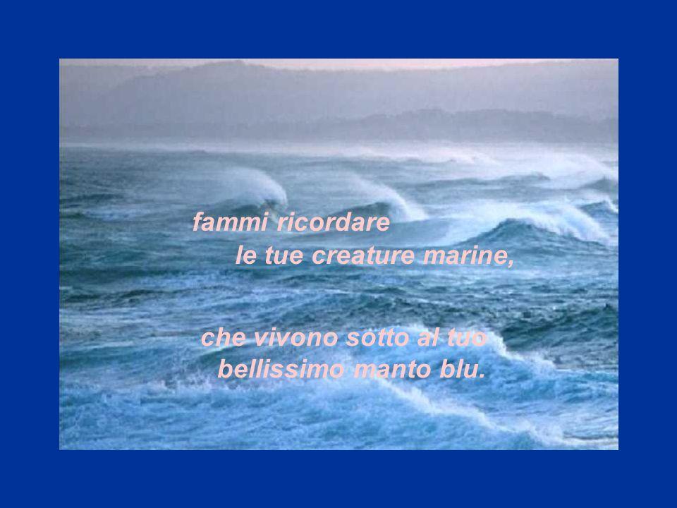 che vivono sotto al tuo bellissimo manto blu Mare che mi culli fammi sognare, fammi ricordare le tue creature marine,