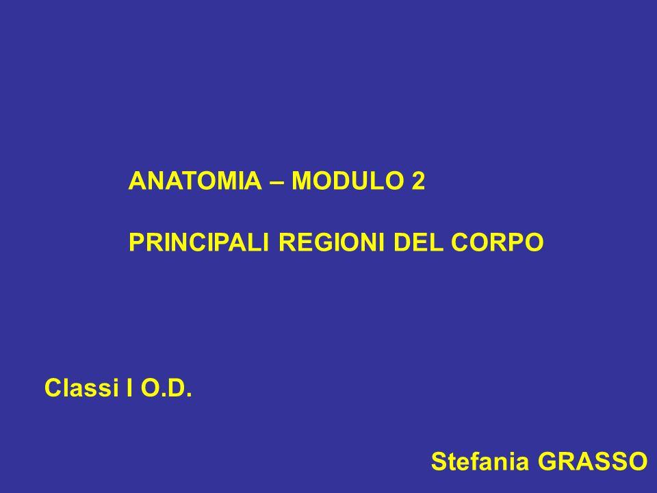 ANATOMIA – MODULO 2 PRINCIPALI REGIONI DEL CORPO Classi I O.D. Stefania GRASSO