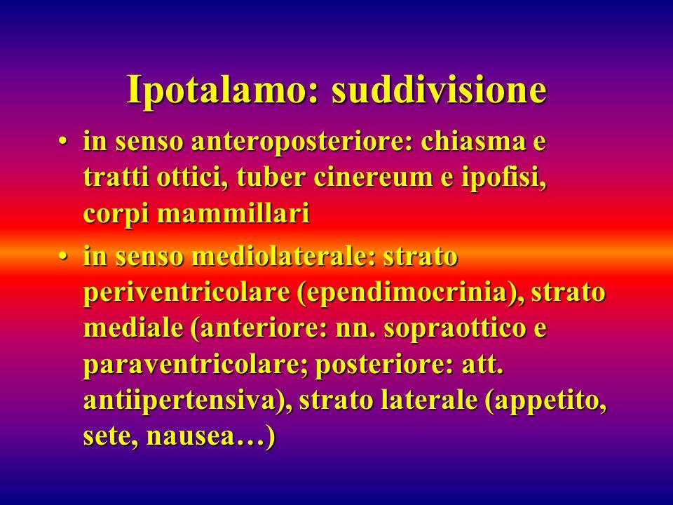 Ipotalamo: suddivisione in senso anteroposteriore: chiasma e tratti ottici, tuber cinereum e ipofisi, corpi mammillariin senso anteroposteriore: chias