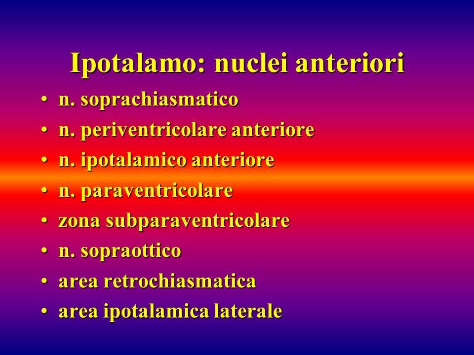 Ipotalamo: nuclei anteriori n. soprachiasmaticon. soprachiasmatico n. periventricolare anterioren. periventricolare anteriore n. ipotalamico anteriore