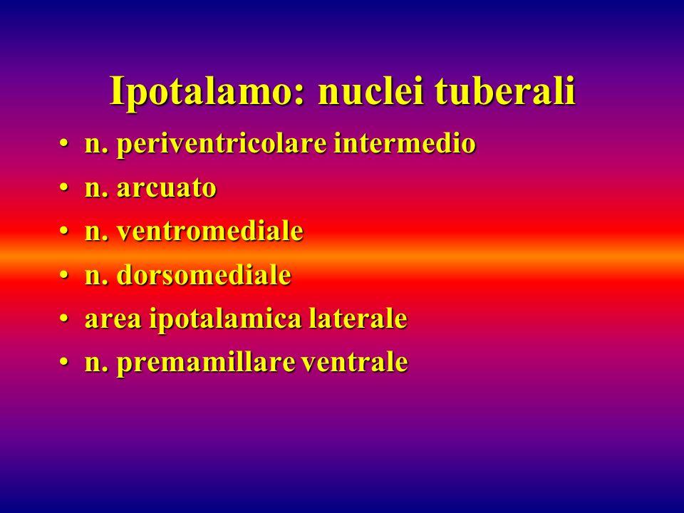 Ipotalamo: nuclei tuberali n. periventricolare intermedion. periventricolare intermedio n. arcuaton. arcuato n. ventromedialen. ventromediale n. dorso