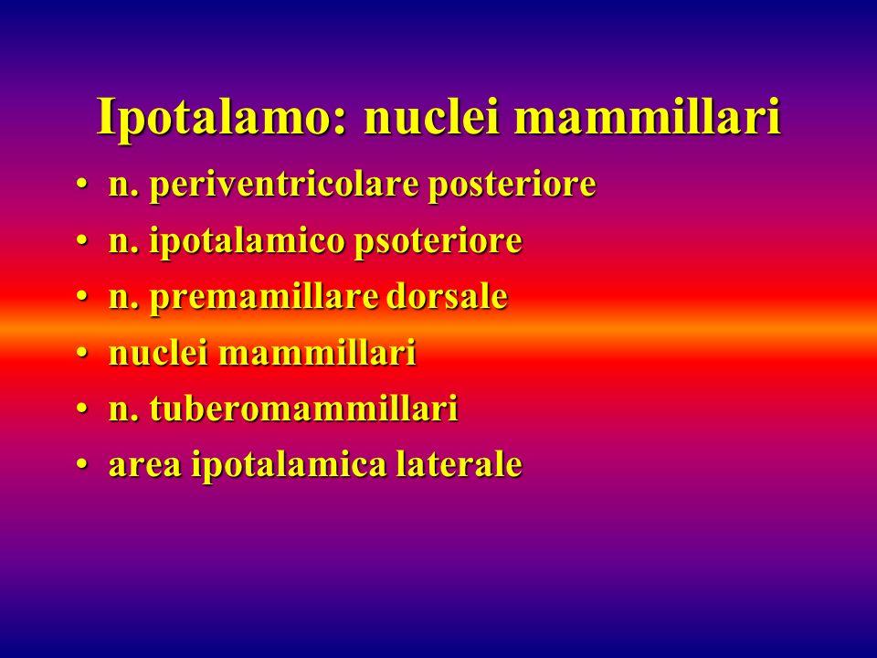 Ipotalamo: nuclei mammillari n. periventricolare posterioren. periventricolare posteriore n. ipotalamico psoterioren. ipotalamico psoteriore n. premam