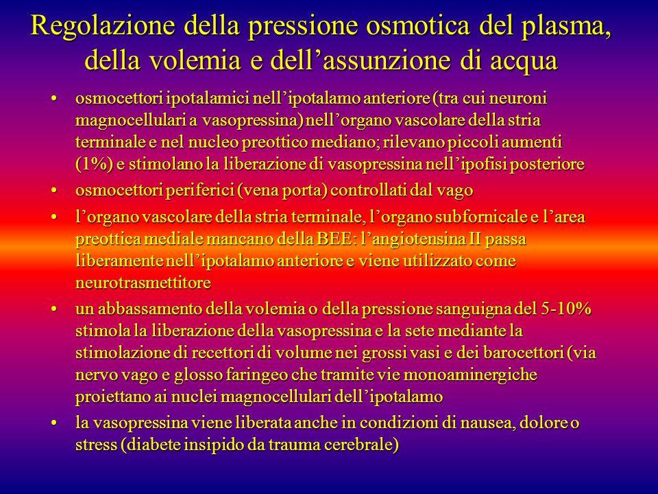 Regolazione della pressione osmotica del plasma, della volemia e dellassunzione di acqua osmocettori ipotalamici nellipotalamo anteriore (tra cui neur