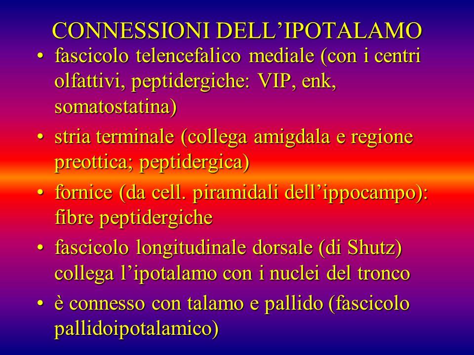CONNESSIONI DELLIPOTALAMO fascicolo telencefalico mediale (con i centri olfattivi, peptidergiche: VIP, enk, somatostatina)fascicolo telencefalico medi