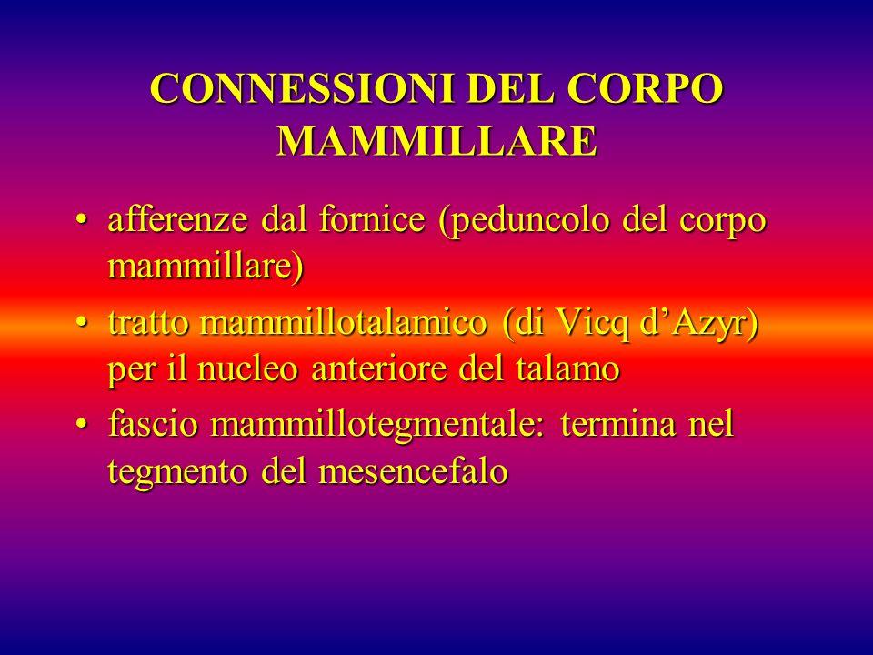 CONNESSIONI DEL CORPO MAMMILLARE afferenze dal fornice (peduncolo del corpo mammillare)afferenze dal fornice (peduncolo del corpo mammillare) tratto m