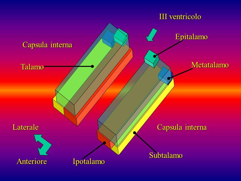 Laterale Anteriore III ventricolo Capsula interna Epitalamo Metatalamo Subtalamo Ipotalamo Talamo