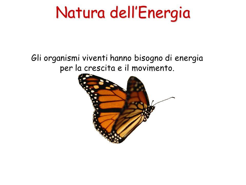 Gli organismi viventi hanno bisogno di energia per la crescita e il movimento. Natura dellEnergia