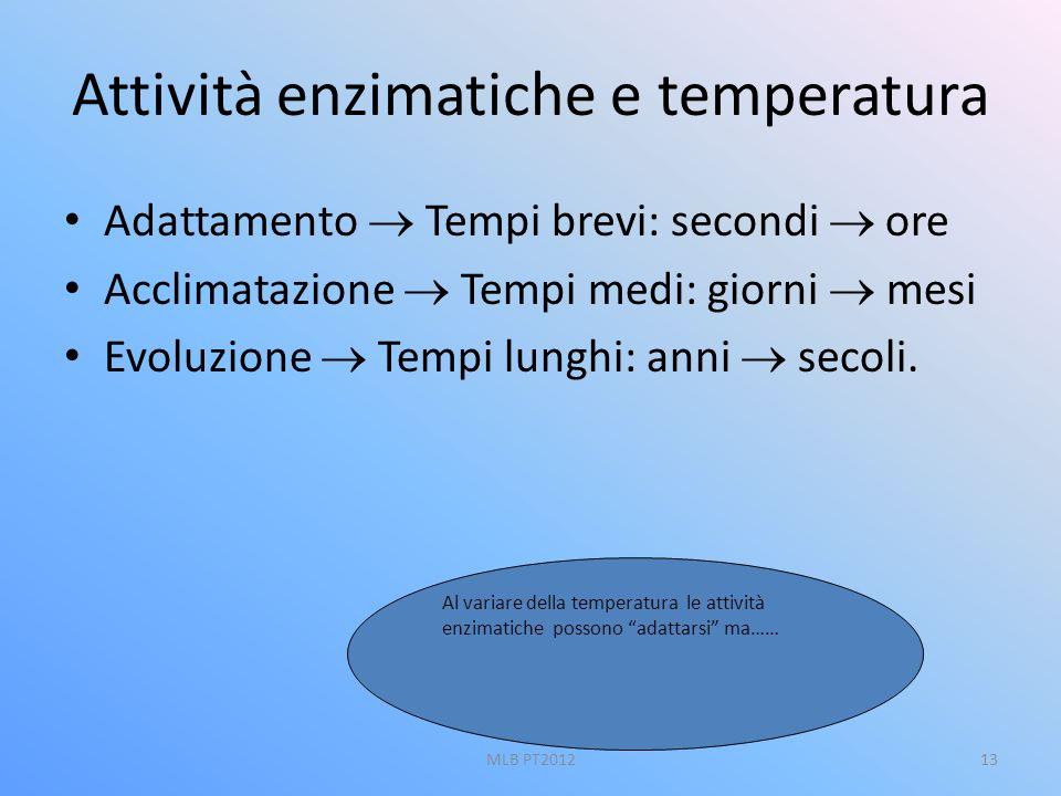 Attività enzimatiche e temperatura Adattamento Tempi brevi: secondi ore Acclimatazione Tempi medi: giorni mesi Evoluzione Tempi lunghi: anni secoli. A