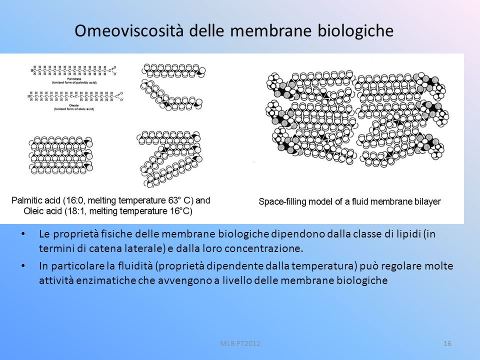 16 Omeoviscosità delle membrane biologiche Le proprietà fisiche delle membrane biologiche dipendono dalla classe di lipidi (in termini di catena later