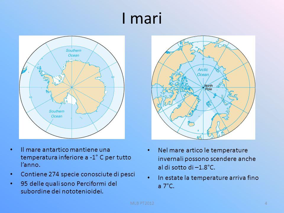 I mari Il mare antartico mantiene una temperatura inferiore a -1° C per tutto lanno. Contiene 274 specie conosciute di pesci 95 delle quali sono Perci
