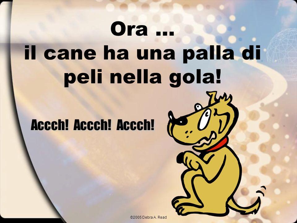 ©2005 Debra A. Read Ora … il cane ha una palla di peli nella gola! Accch! Accch! Accch!