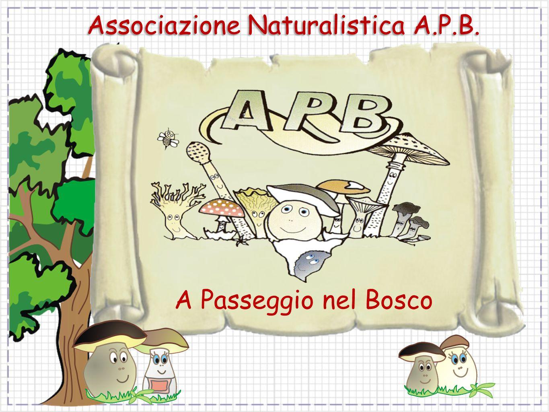 Associazione Naturalistica A.P.B. A Passeggio nel Bosco