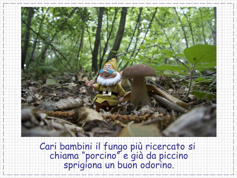 Cari bambini il fungo più ricercato si chiama porcino e già da piccino sprigiona un buon odorino.
