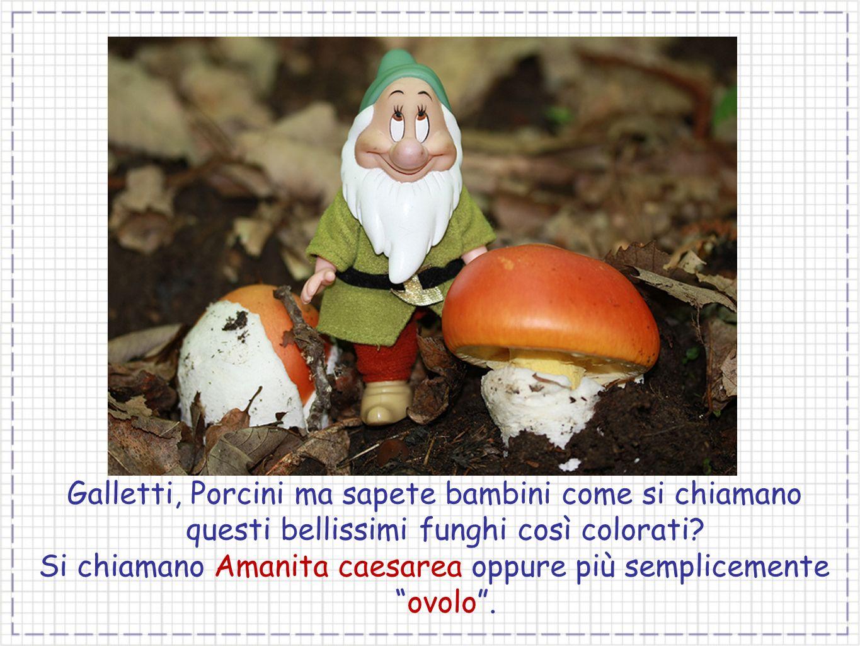 Galletti, Porcini ma sapete bambini come si chiamano questi bellissimi funghi così colorati? Si chiamano Amanita caesarea oppure più semplicementeovol