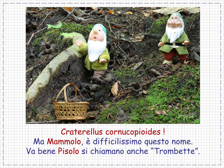 Craterellus cornucopioides ! Ma Mammolo, è difficilissimo questo nome. Va bene Pisolo si chiamano anche Trombette.