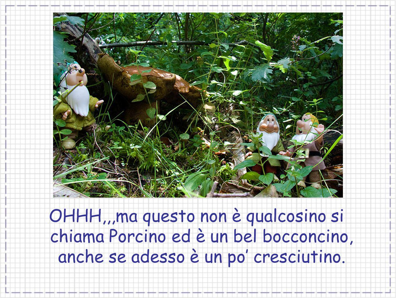 OHHH,,,ma questo non è qualcosino si chiama Porcino ed è un bel bocconcino, anche se adesso è un po cresciutino.
