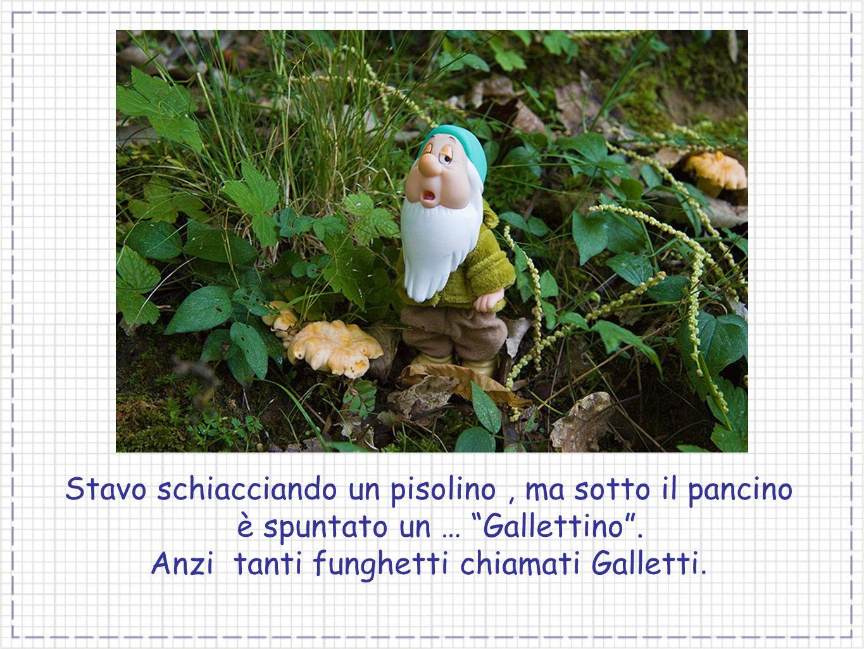 Stavo schiacciando un pisolino, ma sotto il pancino è spuntato un … Gallettino. Anzi tanti funghetti chiamati Galletti.