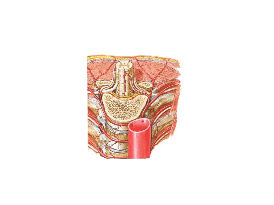 Una lesione midollare porta a : danni sensitivi danni motori Sotto il livello della lesione