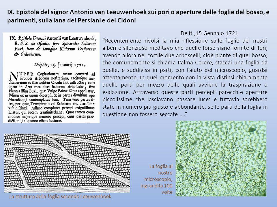 Delft,15 Gennaio 1721 Recentemente rivolsi la mia riflessione sulle foglie dei nostri alberi e silenzioso meditavo che quelle forse siano fornite di f