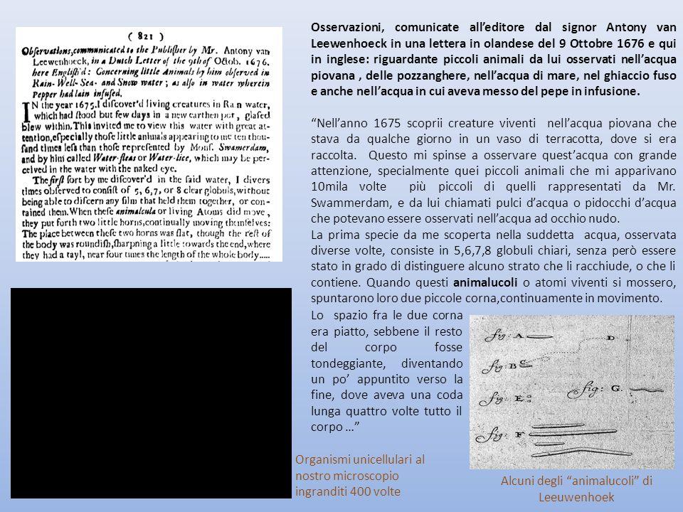 Osservazioni, comunicate alleditore dal signor Antony van Leewenhoeck in una lettera in olandese del 9 Ottobre 1676 e qui in inglese: riguardante picc
