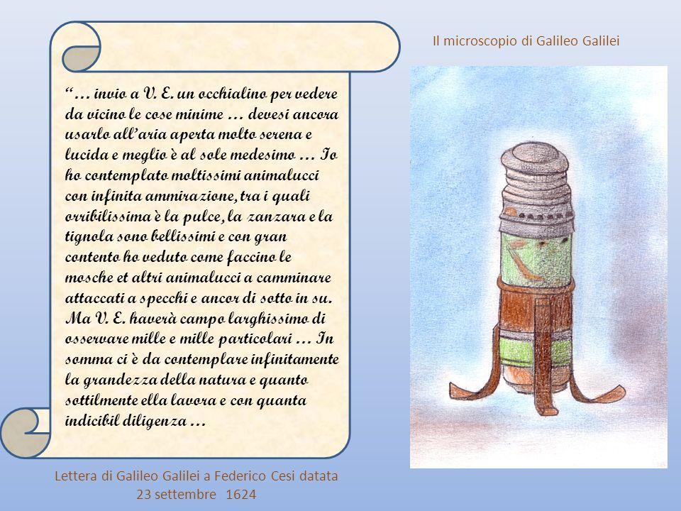 Le osservazioni di Hooke e Leeuwenhoek per quanto acute e dettagliate, rimasero lontane dalla comprensione del vero significato biologico di cellula e bisognerà aspettare ancora due secoli di osservazioni e di perfezionamenti degli strumenti ottici per comprendere che la cellula è lunità fondamentale di ogni essere vivente.