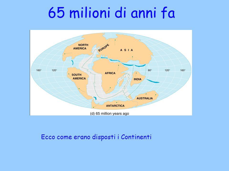 65 milioni di anni fa Ecco come erano disposti i Continenti