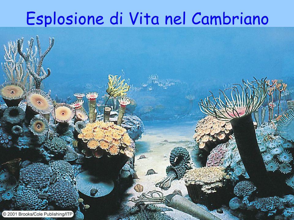 Esplosione di Vita nel Cambriano 28 agosto 2005