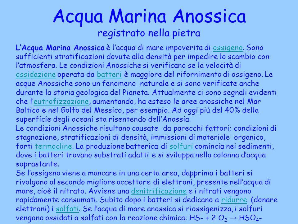 Acqua Marina Anossica registrato nella pietra LAcqua Marina Anossica è lacqua di mare impoverita di ossigeno. Sono sufficienti stratificazioni dovute