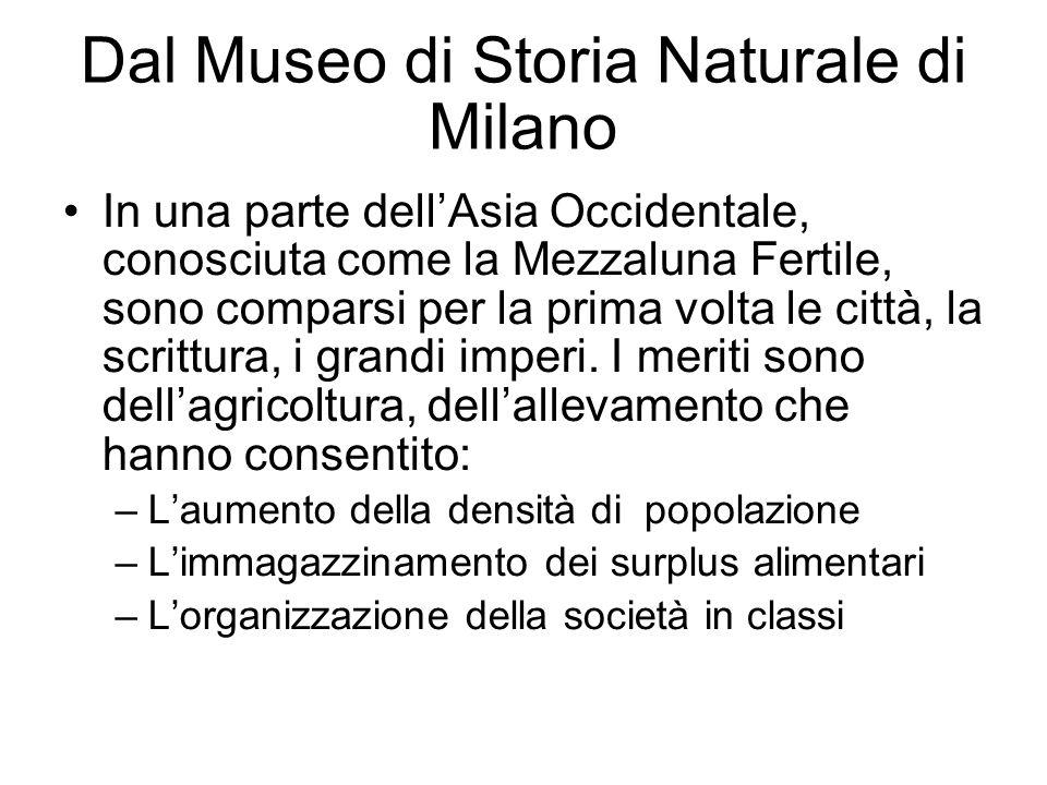 Dal Museo di Storia Naturale di Milano In una parte dellAsia Occidentale, conosciuta come la Mezzaluna Fertile, sono comparsi per la prima volta le ci