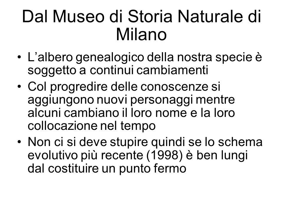 Dal Museo di Storia Naturale di Milano Lalbero genealogico della nostra specie è soggetto a continui cambiamenti Col progredire delle conoscenze si ag