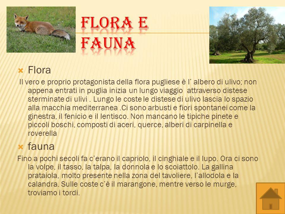Flora Il vero e proprio protagonista della flora pugliese è l albero di ulivo; non appena entrati in puglia inizia un lungo viaggio attraverso distese