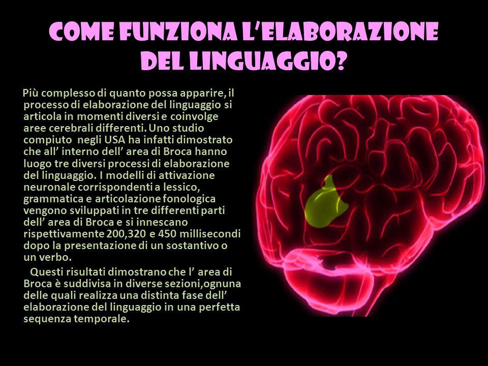 come funziona lelaborazione del linguaggio? Più complesso di quanto possa apparire, il processo di elaborazione del linguaggio si articola in momenti