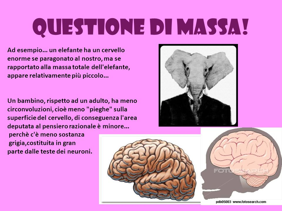 Questione di massa! Ad esempio... un elefante ha un cervello enorme se paragonato al nostro, ma se rapportato alla massa totale dell'elefante, appare