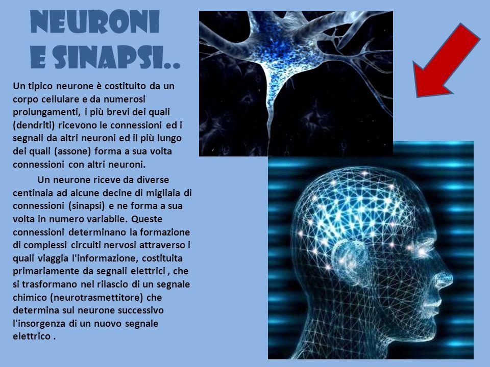 Neuroni e sinapsi.. Un tipico neurone è costituito da un corpo cellulare e da numerosi prolungamenti, i più brevi dei quali (dendriti) ricevono le con