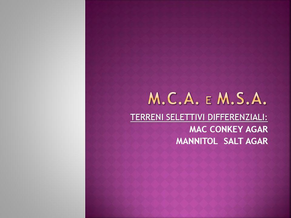 TERRENI SELETTIVI DIFFERENZIALI: MAC CONKEY AGAR MANNITOL SALT AGAR