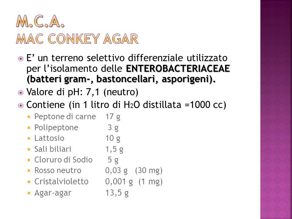 ENTEROBACTERIACEAE (batteri gram-, bastoncellari, asporigeni). E un terreno selettivo differenziale utilizzato per lisolamento delle ENTEROBACTERIACEA