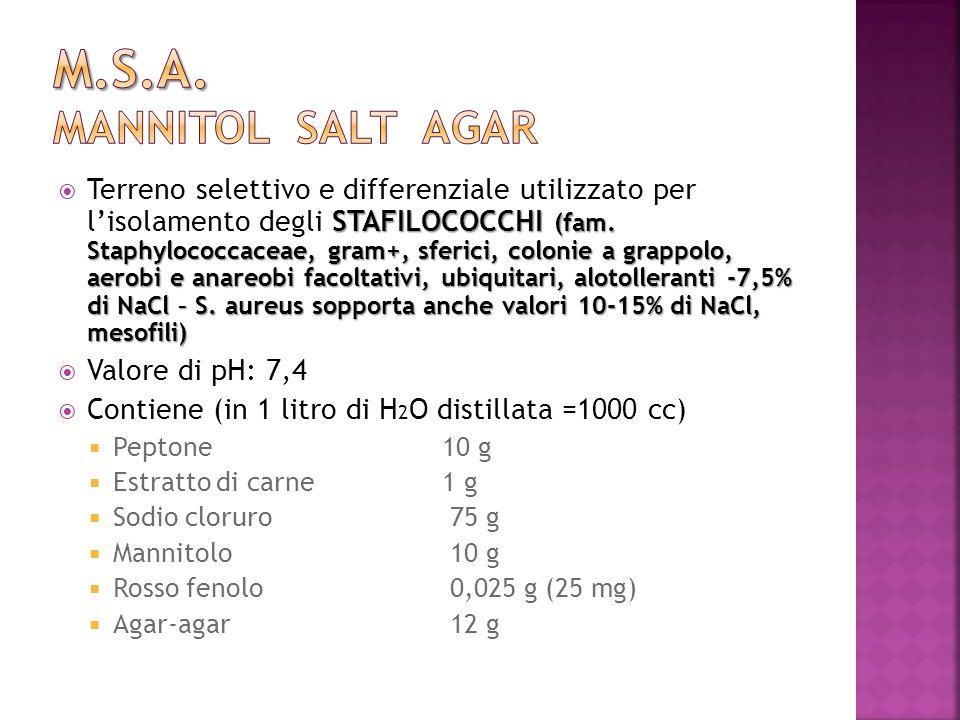STAFILOCOCCHI (fam. Staphylococcaceae, gram+, sferici, colonie a grappolo, aerobi e anareobi facoltativi, ubiquitari, alotolleranti -7,5% di NaCl – S.