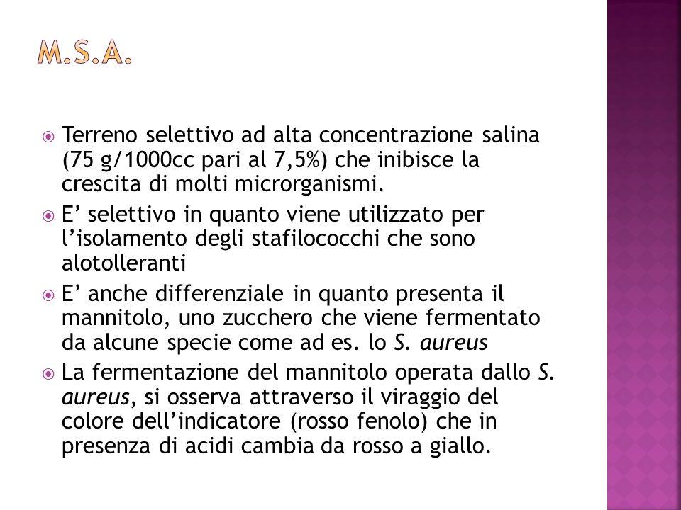 Terreno selettivo ad alta concentrazione salina (75 g/1000cc pari al 7,5%) che inibisce la crescita di molti microrganismi. E selettivo in quanto vien