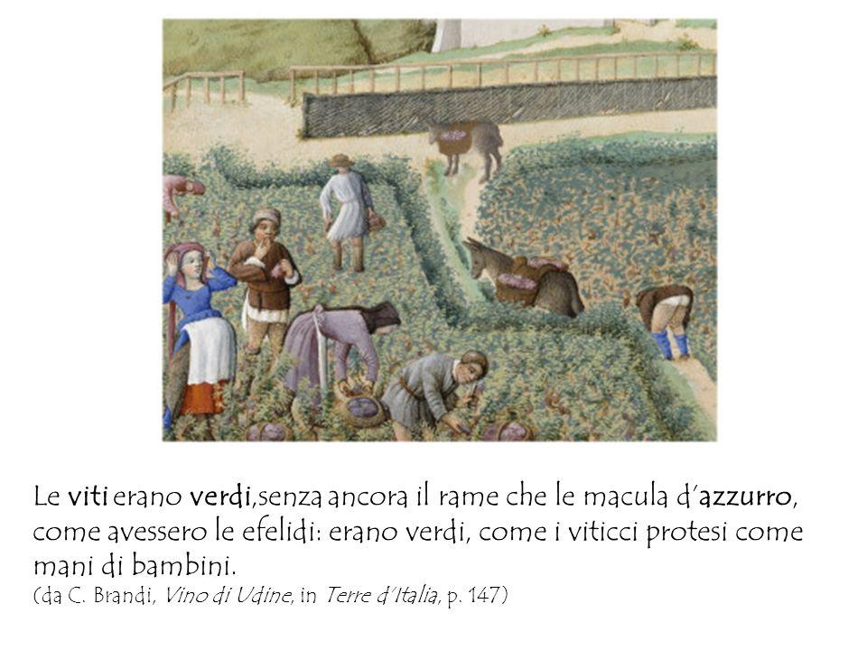 Le viti erano verdi,senza ancora il rame che le macula dazzurro, come avessero le efelidi: erano verdi, come i viticci protesi come mani di bambini. (